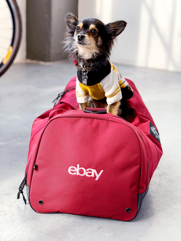 eBay dog